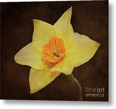 Daffy's Edge Metal Print by Andee Design