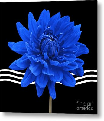 Dahlia Flower And Wavy Lines Triptych Canvas 2 - Blue Metal Print by Natalie Kinnear