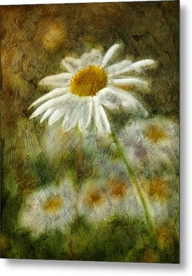 Daisies ... Again - P11at01 Metal Print by Variance Collections