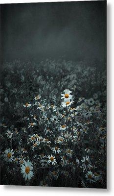 Daisies-daisies Metal Print by Svetlana Sewell