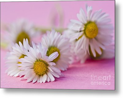 Daisies On Pink Metal Print by Jan Bickerton
