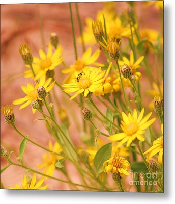 Daisy A Day Series  Metal Print by Julie Lueders
