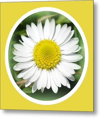 Daisy Closeup Metal Print by The Creative Minds Art and Photography