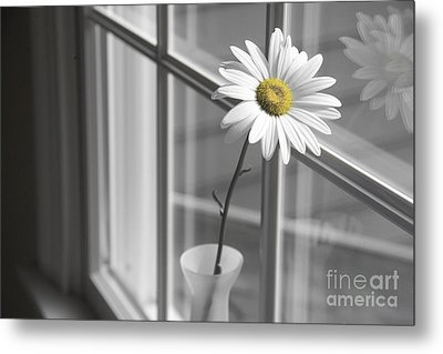 Daisy In The Window Metal Print by Diane Diederich