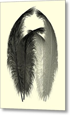 Dance Of The Feathers Metal Print by David Dehner