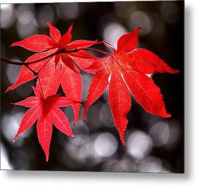Dancing Japanese Maple Metal Print by Rona Black