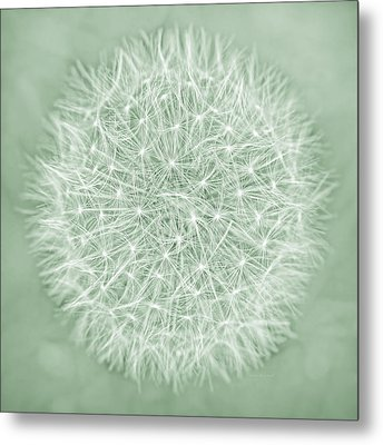 Dandelion Macro Abstract Soft Green Metal Print by Jennie Marie Schell