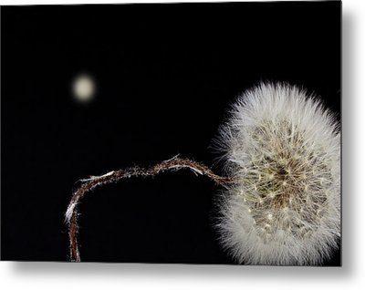 Dandelion Parachute Ball Metal Print by Bob Orsillo
