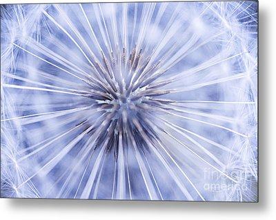Dandelion Seeds Metal Print by Elena Elisseeva