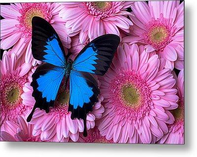 Dark Blue Butterfly Metal Print by Garry Gay