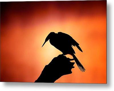 Darter Silhouette With Misty Sunrise Metal Print by Johan Swanepoel