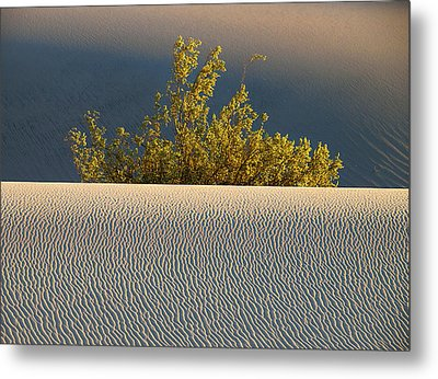 Dawn Mesquite  Metal Print by Joe Schofield