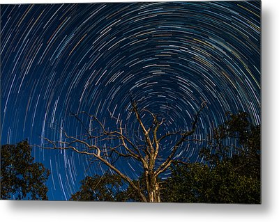 Dead Oak With Star Trails Metal Print by Paul Freidlund