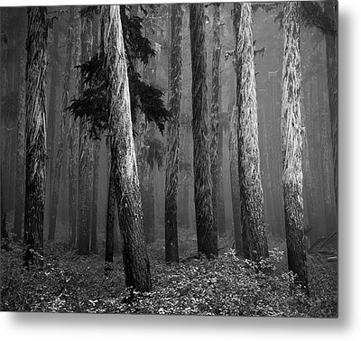 Deep Forest Metal Print by Leland D Howard