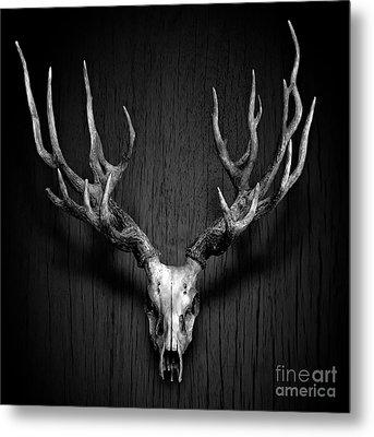 Deer Antler Hang On Wood Panel Metal Print by Nuttakit Sukjaroensuk