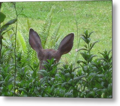 Deer Ear In A Mint Patch Metal Print by Kym Backland