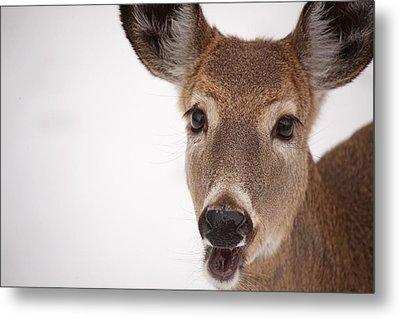 Deer Talk Metal Print by Karol Livote