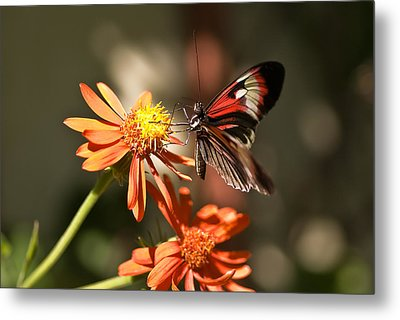 Delicate Beauty Metal Print by Michael Rucci
