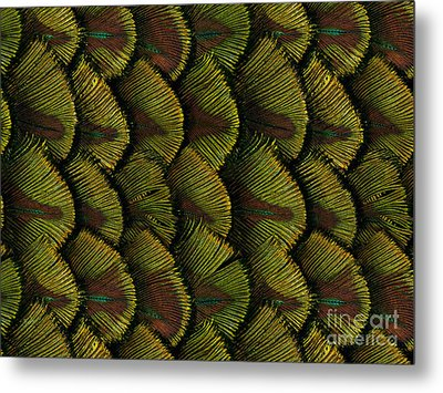 Delicate Feather Metal Print by Bedros Awak