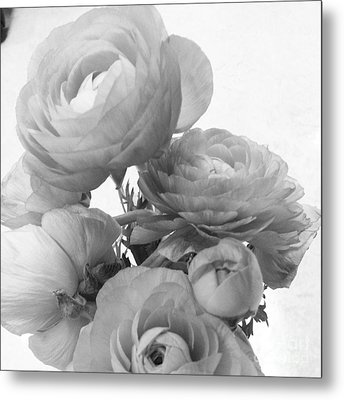 Delicate Ranunculus Metal Print by Heather L Wright