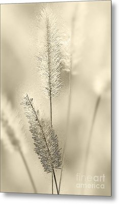 Delicate Sweetgrass Metal Print by Heiko Koehrer-Wagner