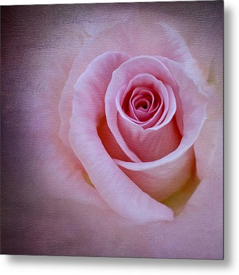 Delicately Pink Metal Print by Ivelina G