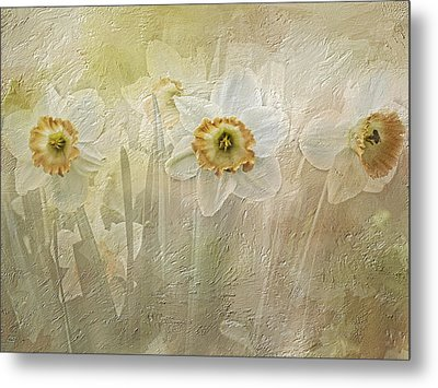 Delightful Daffodils Metal Print by Diane Schuster