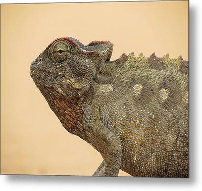 Desert Chameleon Metal Print by Ramona Johnston