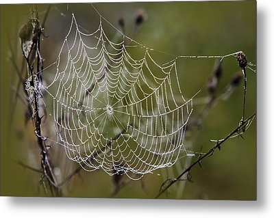 Dew Drops Spider Web Metal Print by Christina Rollo