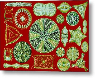 Diatoms-ernst Haeckel Metal Print by Scott Camazine
