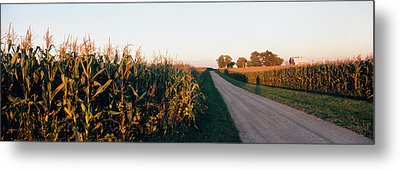 Dirt Road Passing Through Fields Metal Print by Panoramic Images