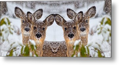 Doe You See Me Metal Print by Betsy Knapp