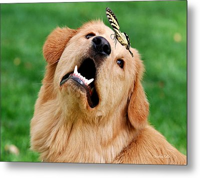 Dog And Butterfly Metal Print by Christina Rollo
