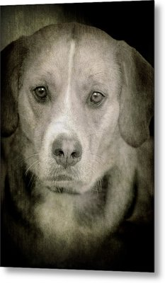 Dog Posing Metal Print by Loriental Photography