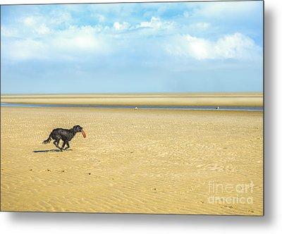 Dog Running On A Beach Metal Print by Diane Diederich