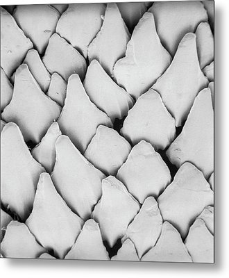Dogfish Scales Metal Print by Natural History Museum, London