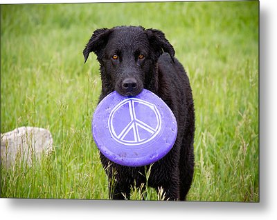 Dogs For Peace Metal Print by James BO  Insogna
