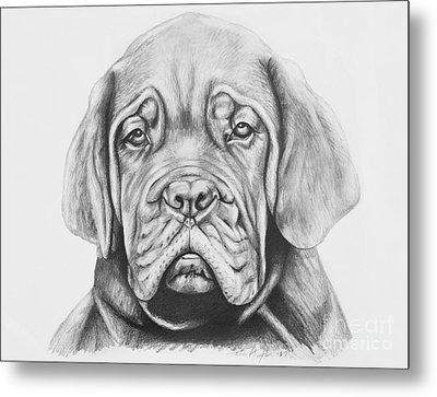 Dogue De Bordeaux Dog Metal Print by Lena Auxier