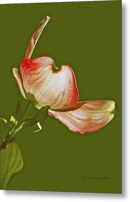 Metal Print featuring the photograph Dogwood Blossom In Spring by A Gurmankin