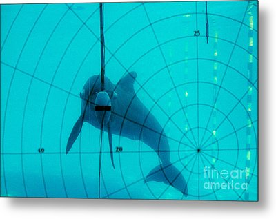 Dolphin Experiment Metal Print by James L. Amos