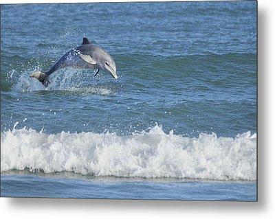Dolphin In Surf Metal Print by Bradford Martin