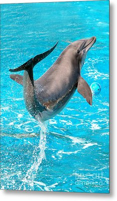 Dolphin Plays Metal Print by Michal Bednarek