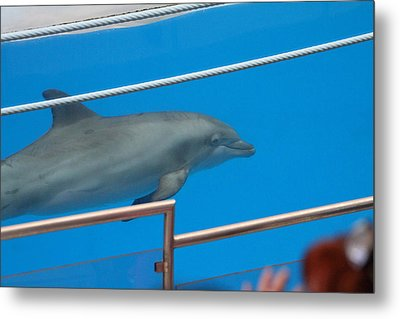 Dolphin Show - National Aquarium In Baltimore Md - 1212121 Metal Print by DC Photographer