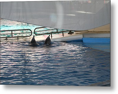 Dolphin Show - National Aquarium In Baltimore Md - 121217 Metal Print by DC Photographer