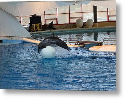 Dolphin Show - National Aquarium In Baltimore Md - 1212171 Metal Print by DC Photographer