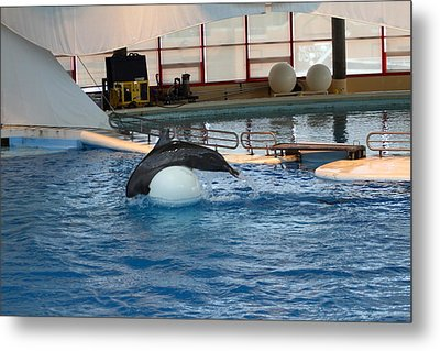 Dolphin Show - National Aquarium In Baltimore Md - 1212172 Metal Print by DC Photographer