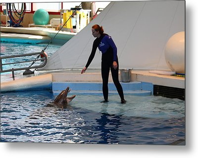 Dolphin Show - National Aquarium In Baltimore Md - 1212197 Metal Print by DC Photographer