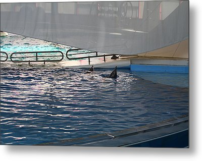 Dolphin Show - National Aquarium In Baltimore Md - 121220 Metal Print by DC Photographer