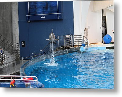 Dolphin Show - National Aquarium In Baltimore Md - 1212200 Metal Print by DC Photographer