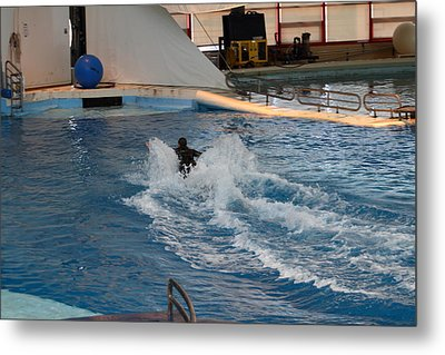 Dolphin Show - National Aquarium In Baltimore Md - 1212245 Metal Print by DC Photographer